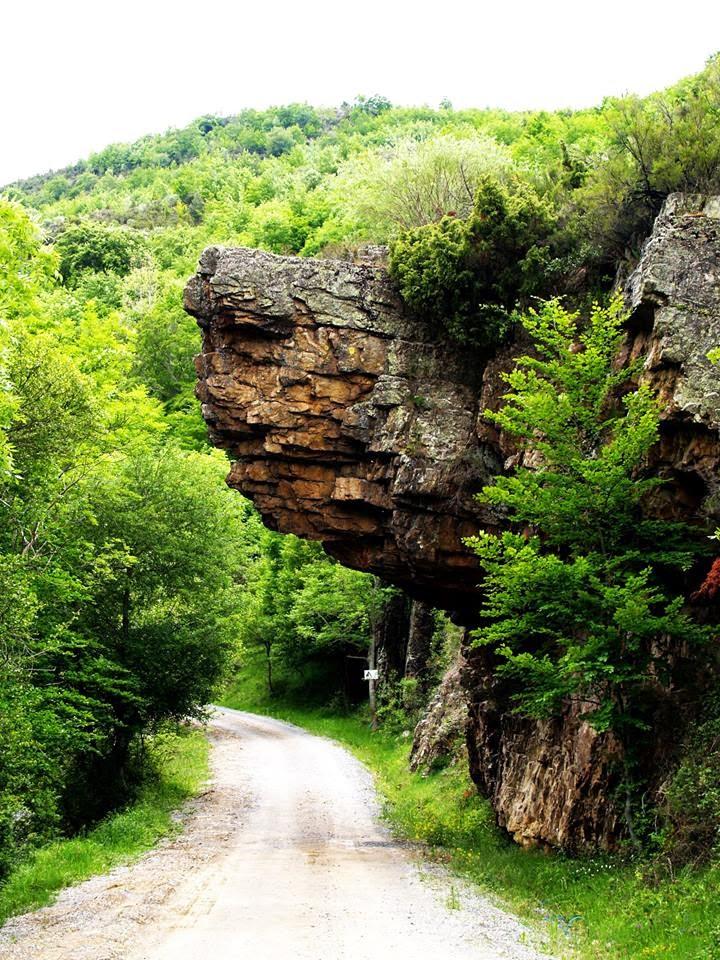 """""""Cubrecaminos"""". Entrada al Hayedo de Monte Real en Ajamil de Cameros."""