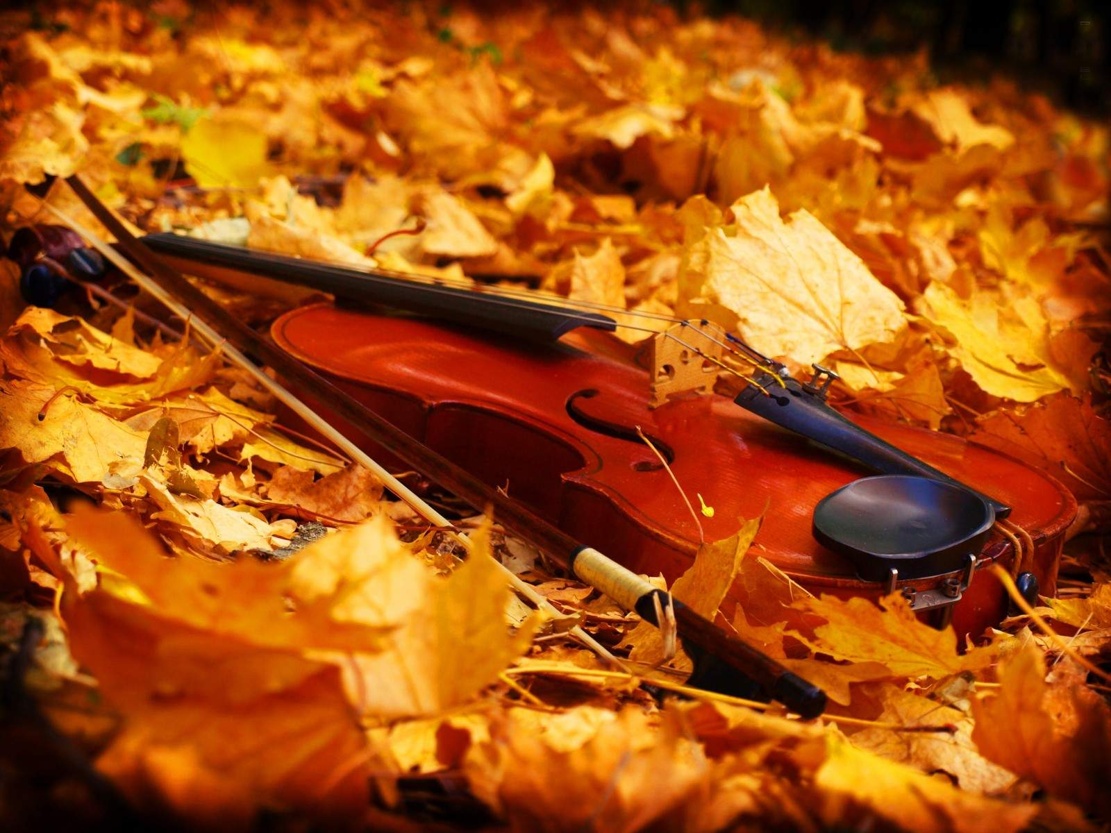 Violin in the autumn wallpape - Music Violins Collection