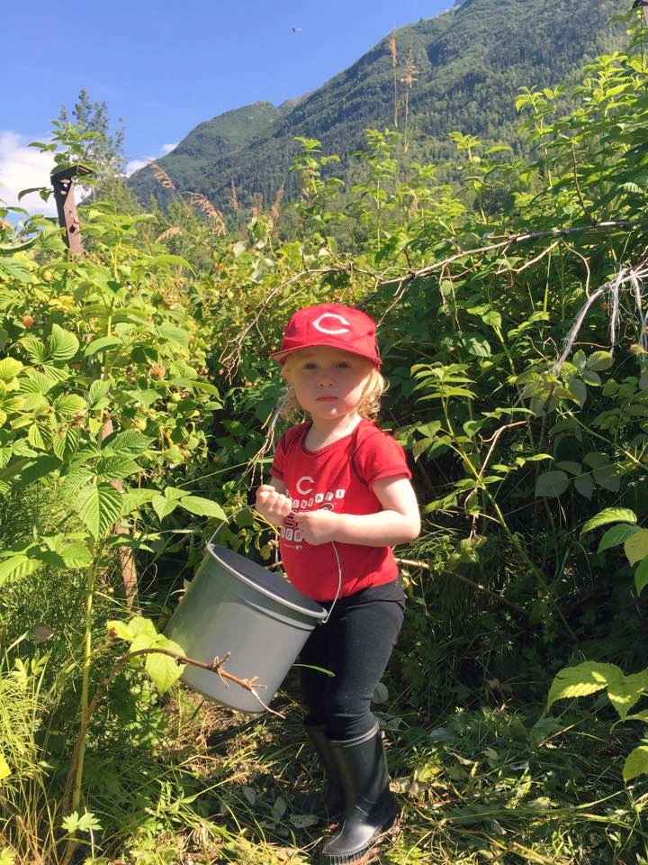 alaska raspberry picking