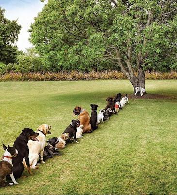 dog lineup