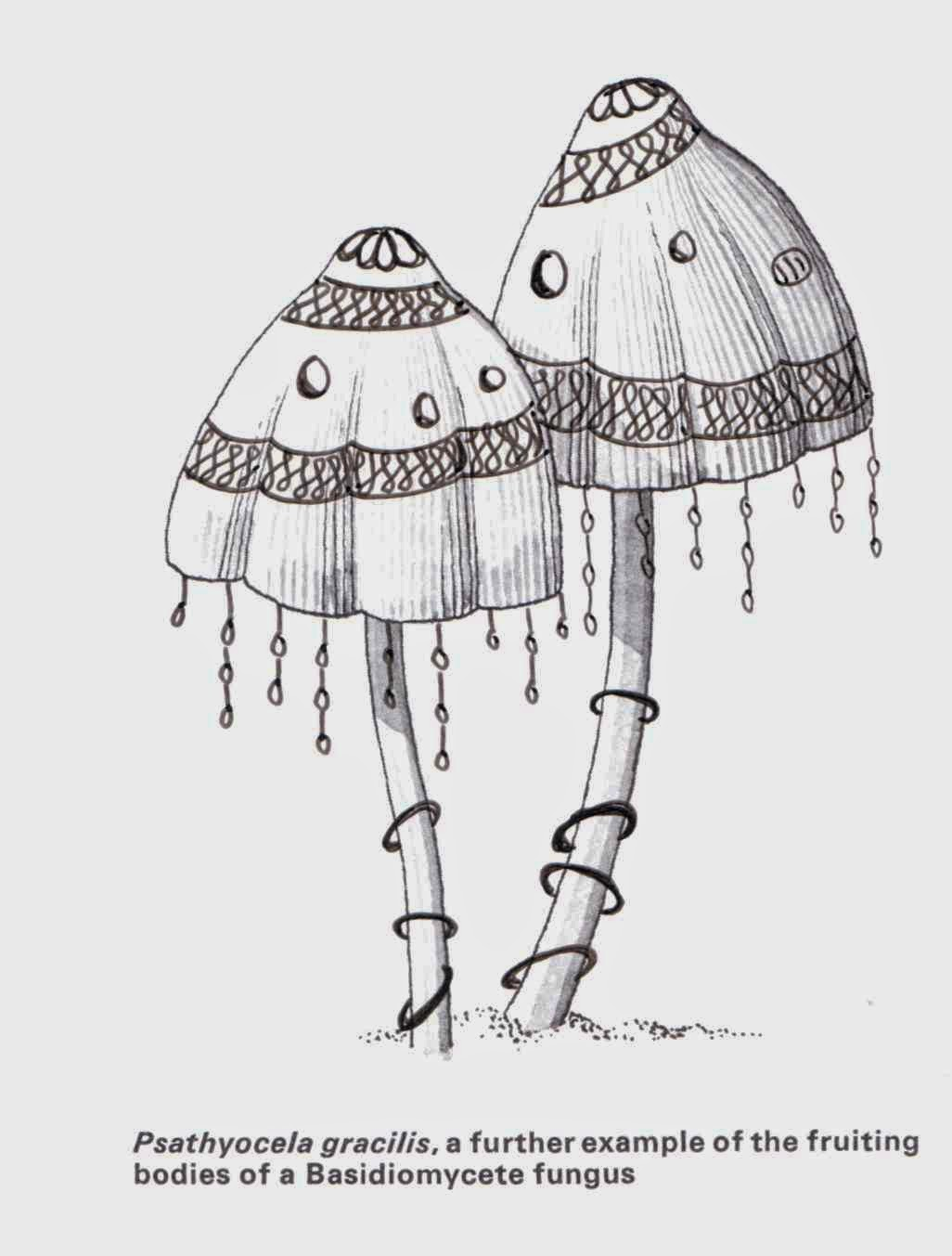 Zentangle drawn over illustration of two mushrooms