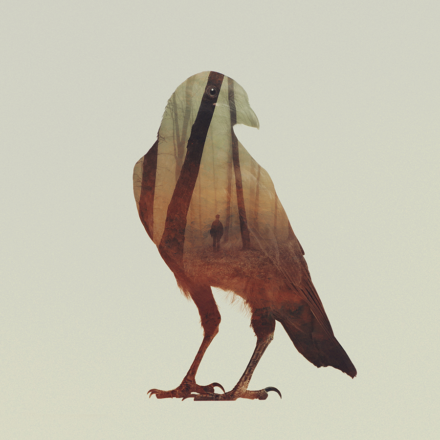 02-Crow-Andreas-Lie-Animals-in-Photographic-Double-Exposures-www-designstack-co