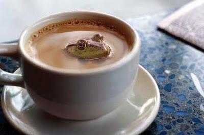 sapo en taza de cafe