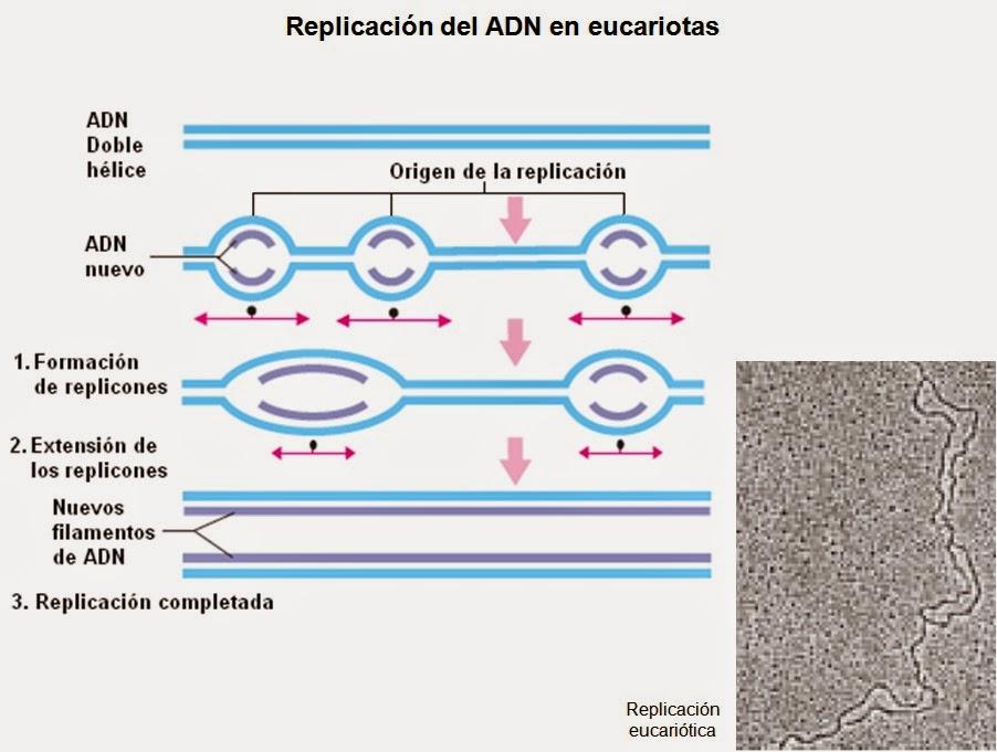 Proteínas (II). Resumen de las estructuras de las proteínas ...
