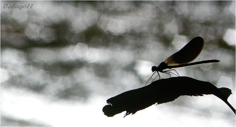 emphoka, photo of the day, David BG, Nikon Coolpix P80