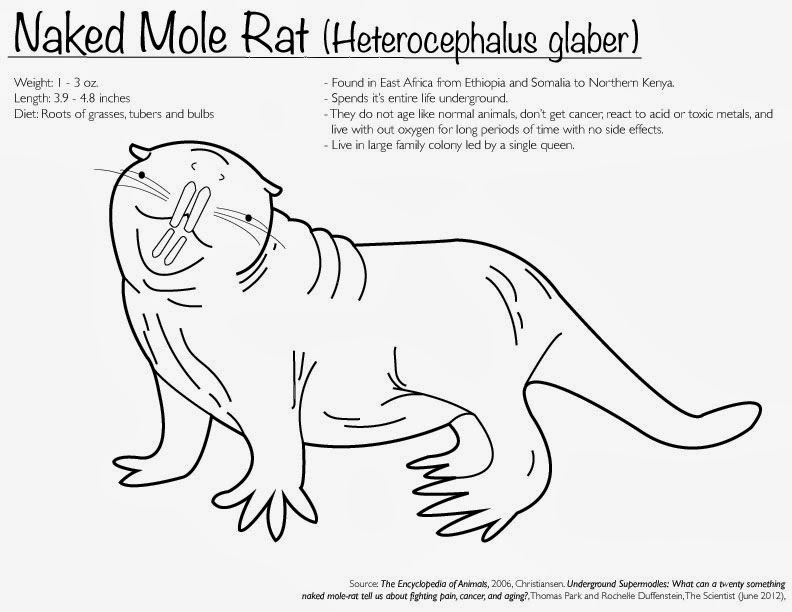 underground supermodels what can a twenty something naked mole rat tell us about fighting pain cancer and aging thomas park and rochelle duffenstein