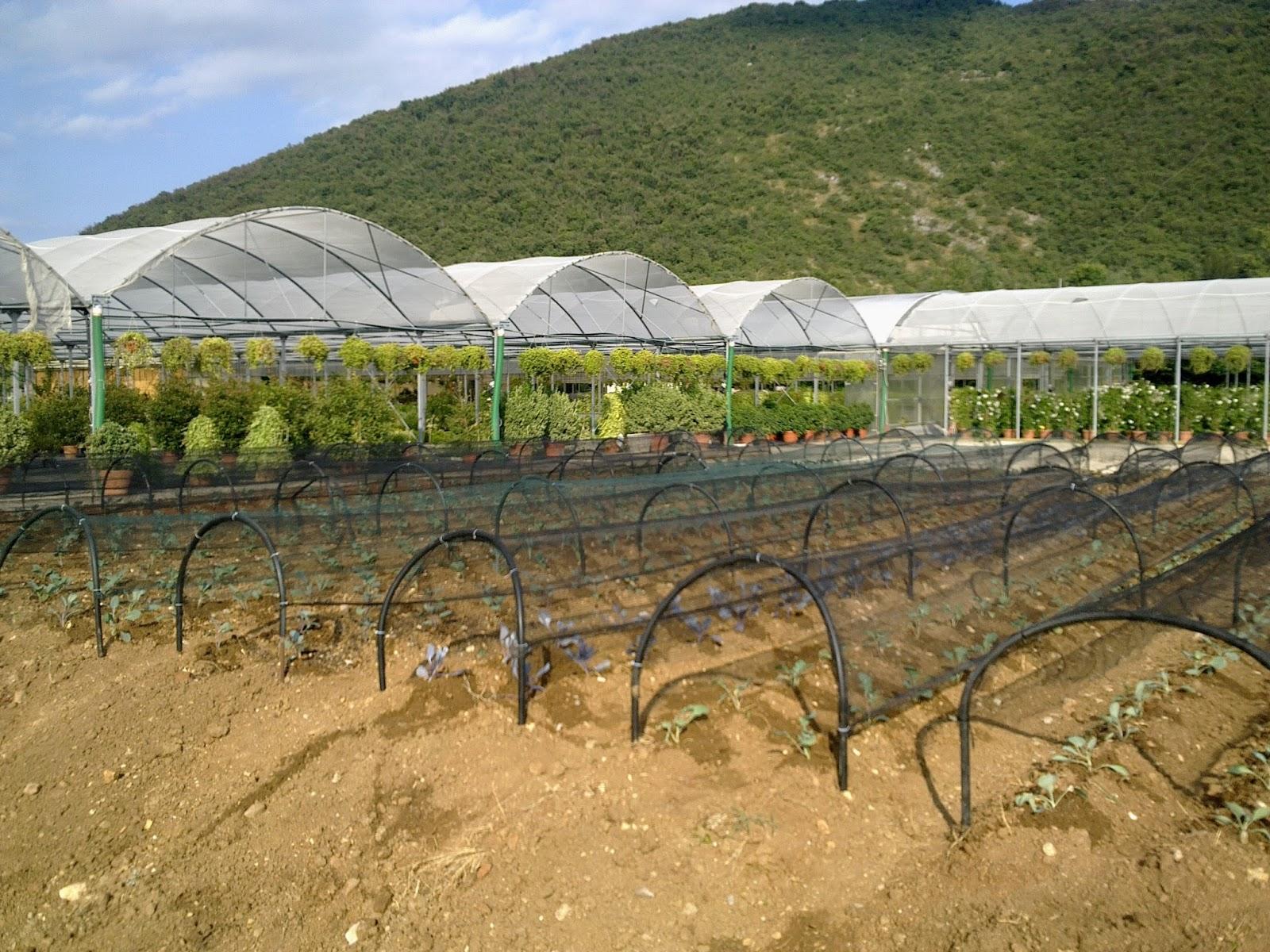 Azienda agricola nicola freri l 39 orto invernale for Orto invernale