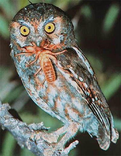 Cara Memberi Makan Burung Hantu Drh Fira Sovica