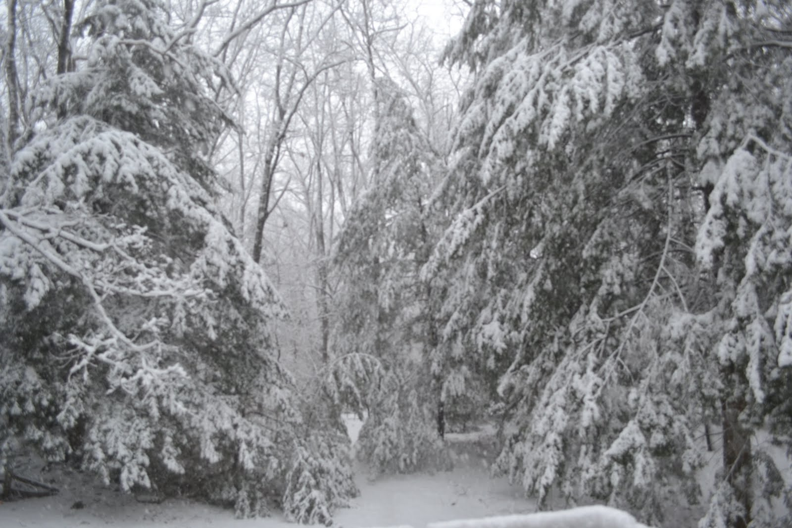 stopping-by-woods-on-a-snowy-evening.jpg