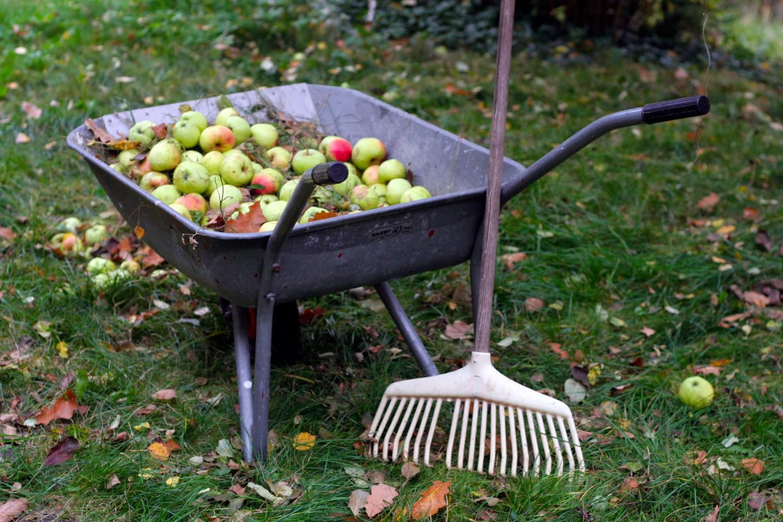 Öarnas trädgårdsplanering: oktober 2013