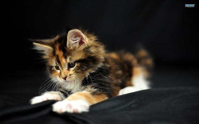 Cute Pussy Cat 38