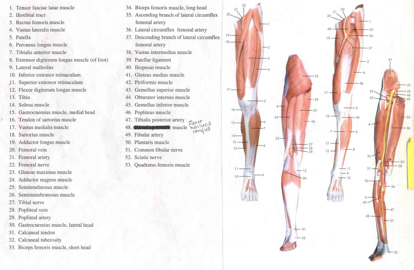 Diagram Of Foot Structure Wiring Diagram