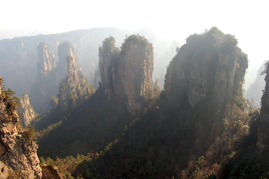 Pix Grove Huangshan Or Yellow Mountain