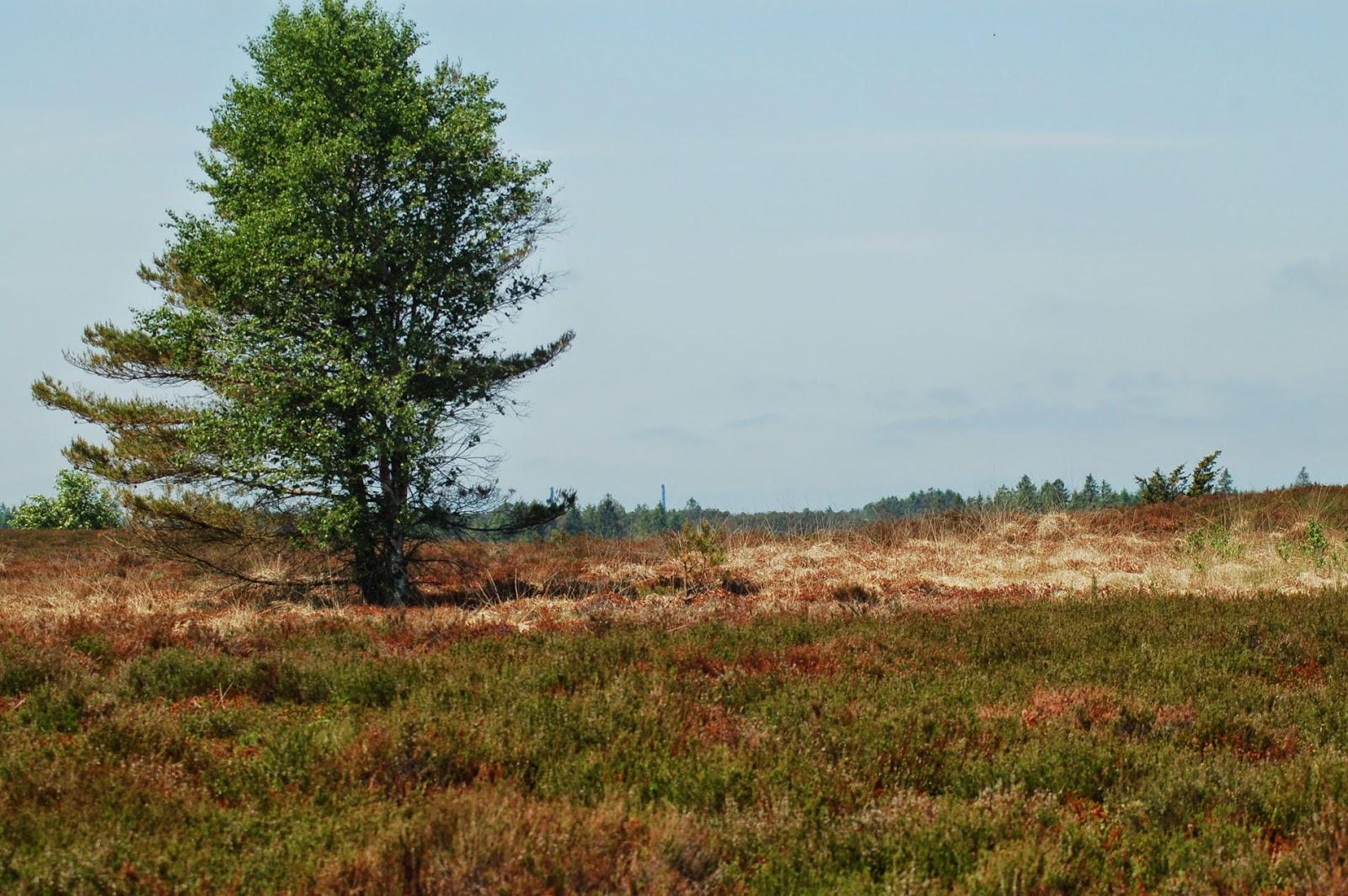moerk skov i sverige