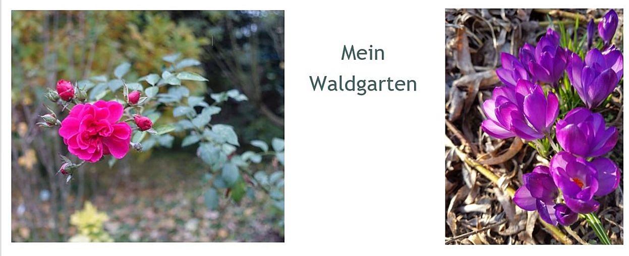 Mein Waldgarten