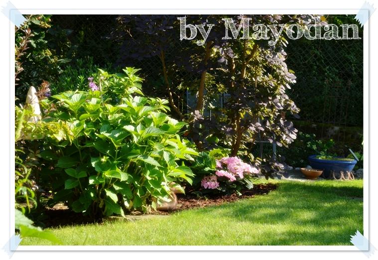 Hortensienliebe Und Mehr Mayodans Garden Crafts