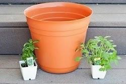 7 secretos para un jardín en materos exitoso.