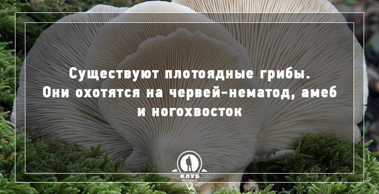 10 интересных фактов о грибах