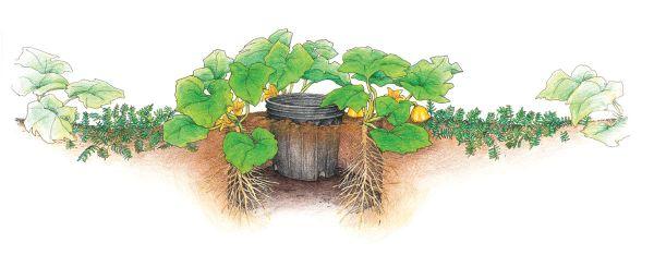 Tips For Growing Squash 101 Gardening