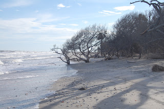 botany bay beach edisto island