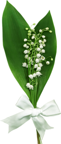 Gif Paradise Lily Of The Valley