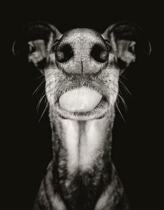 Фото новости. Собачьи портреты Эльке Фогельзанг
