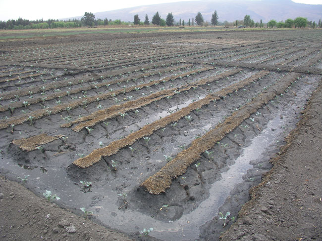 Agricultura sustentable c mo producir m s alimentos sin for 5 cuidados del suelo