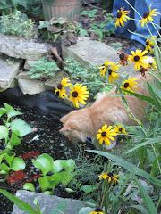 Gabby Garden Gals