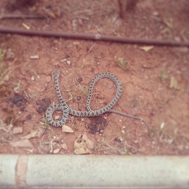 serpiente onda