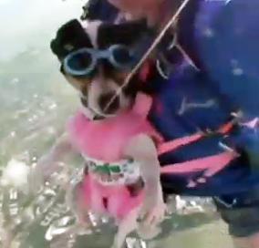 Nueva moda: gatos y perros paracaidistas