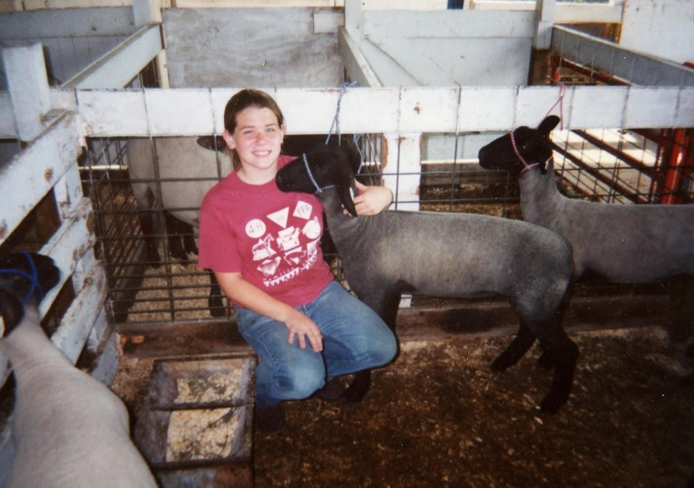 Showing lambs through FFA at the County Fair
