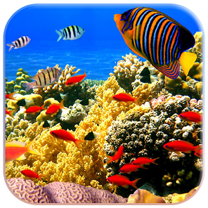 3D Fish Live Wallpaper full apk
