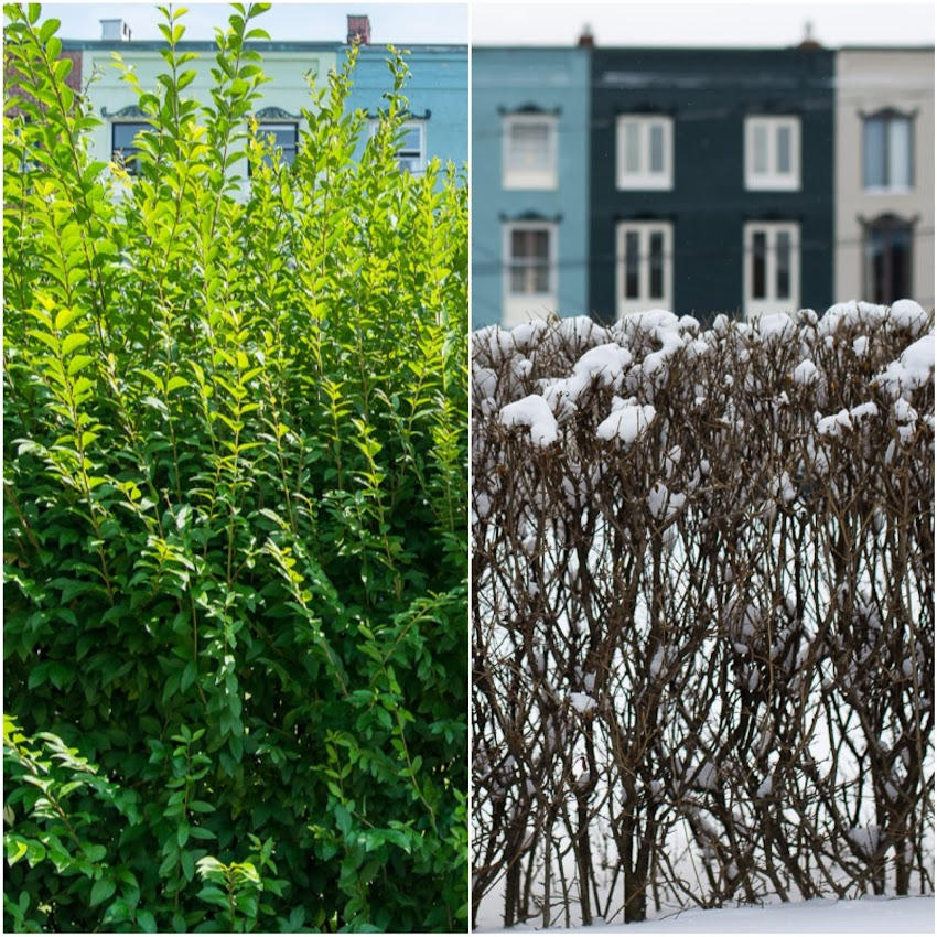 Stratton Place Portland, Maine USA photo by Corey Templeton. Another seasonal photo, showing the difference between January and August of 2015 at the Stratton Place row houses.