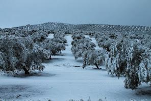 Campo Nevado