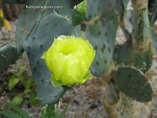 Cacti fuzzydragons.com