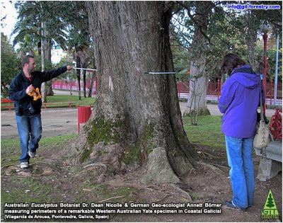 Australian eucalypt Botanist Dr Dean Nicolle and German geoecologist Dr Annett Boerner from the Max Planck Institute register and measure a Giant Yate tree, Eucalyptus cornuta, in Vilagarcia de Arousa, Galicia, probably the largest of its type in Europe / El botanico de eucaliptos australiano Dr Dean Nicolle y la geoecologa alemana Dr Annett Boerner de la Sociedad Max Planck para el avance de la Ciencia registran y miden un eucalipto Yate gigante, Eucalyptus cornuta, en Vilagarcia de Arousa, Galicia, probablemente el mas grande de su tipo en Europa / 澳大利亚桉树植物学博士和德国geoecologist院长尼科尔博士阿内特Boerner来自马克斯普朗克研究所和衡量一个巨人登记亚特树,桉树枸骨在Vilagarcia德Arousa,加利西亚,可能是其在欧洲最大的同类型, / Australian eucalypt kasvitieteilijä tri Dean Nicolle ja Saksan geoecologist tohtori Annett Boerner peräisin Max Planck-instituutin rekisteröityä ja mitata Giant Yate puu, Eucalyptus cornuta vuonna Vilagarcia de Arousa, Galicia, luultavasti suurin lajissaan Euroopassa / Australian Eukalyptus Botaniker Dr. Dean Nicolle und deutschen Geoökologe Dr. Annett Börner vom Max-Planck-Institut registrieren und messen Giant Yate Baum, Eucalyptus cornuta, in Vilagarcia de Arousa, Galicien, wahrscheinlich die größte ihrer Art in Europa / マックスプランク研究所から、オーストラリアのユーカリの植物学者博士ディーンニコールは、ドイツgeoecologist博士アネットボアーナーレジスタVilagarciaデArousa、ガリシア、おそらくヨーロッパでは、その型の最大の巨大ヤーテツリー、ユーカリコーナッタ、測定 / 맥스 플랑크 연구소에서 호주의 유칼립투스 식물학 박사 딘 Nicolle는 독일어 geoecologist 박사 아네트 Boerner 등록하고 Vilagarcia 드 Arousa, 갈리 시아, 아마 유럽에서 해당 유형의 최대 규모의 거대한 Yate 트리, 유칼립투스 cornuta, 측정 / Австралийский эвкалипт ботаник д-р Дин Николь и немецкий geoecologist Доктор Аннетт Бернер из Института Макса Планка зарегистрироваться и меры дерева Гигантские Йет, эвкалипта Корната, в Vilagarcia-де-Ароса, Галиции, вероятно, крупнейшим в своем роде в Европе / Australiska eucalypt Botanist Dr Dean Nicolle och tyska geoecologist Dr Annett Boerner från Max Planck-institutet registrera och mäta en Giant Yate träd, Eucalyptus cornuta, i Vilagarcia de Arousa, Galicia, förmodligen den största i sitt slag i Europa / Thực vật học người Úc bạch đàn và Tiến sĩ Dean Nicolle geoecologist Tiến sĩ Đức Annett Boerner từ Viện Max Planck đăng ký và đo lường một Giant Yate cây, cornuta bạch đàn, trong Vilagarcia de Arousa, Galicia, có lẽ là lớn nhất của loại hình của nó ở châu Âu / O botânico australiano de eucaliptos Dr. Dean Nicolle e geoecologa alemã Dr Annett Boerner do Instituto Max Planck a registrar e medir uma árvore gigante Yate, Eucalyptus cornuta, em Vilagarcia de Arousa, na Galiza, provavelmente o maior de seu tipo na Europa / Gustavo Iglesias Trabado / GIT Forestry Consulting SL, Consultoría y Servicios de Ingeniería Agroforestal, Galicia, España, Spain / Eucalyptologics, information resources on Eucalyptus cultivation around the world / Eucalyptologics, recursos de informacion sobre el cultivo del eucalipto en el mundo