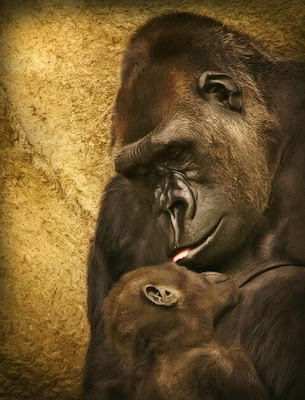 Mothers love Animals Love Picture