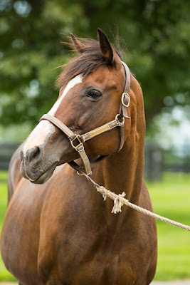 broodmare, well armed, well dressed, winstar farm, well armed's dam, kentucky