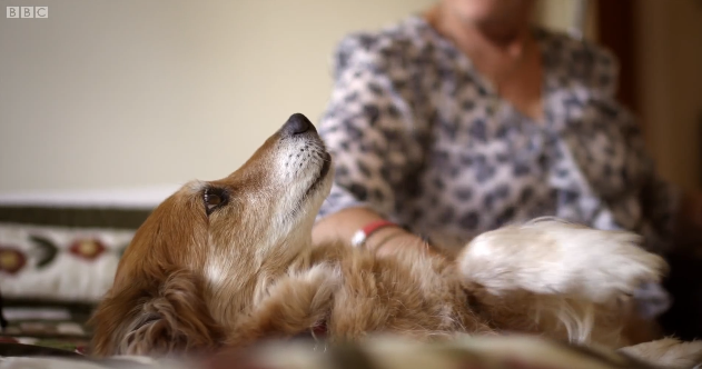 Cão detecta câncer na dona através do olfato