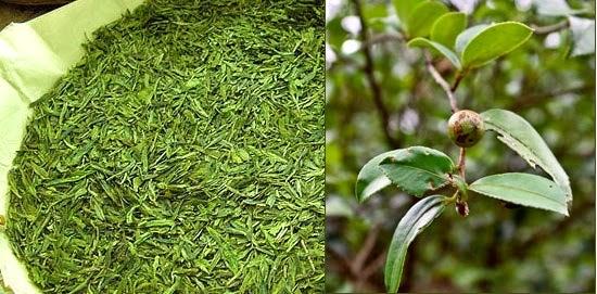 tea tree oriflame