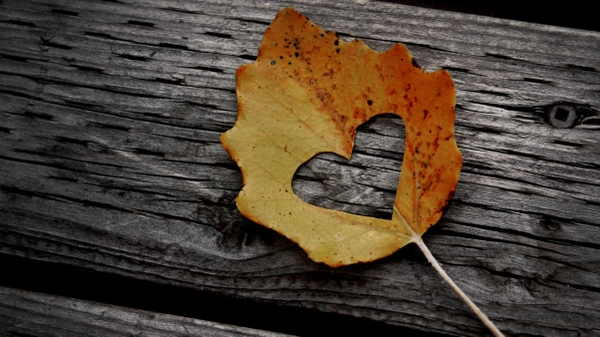 Autumn Hearts2