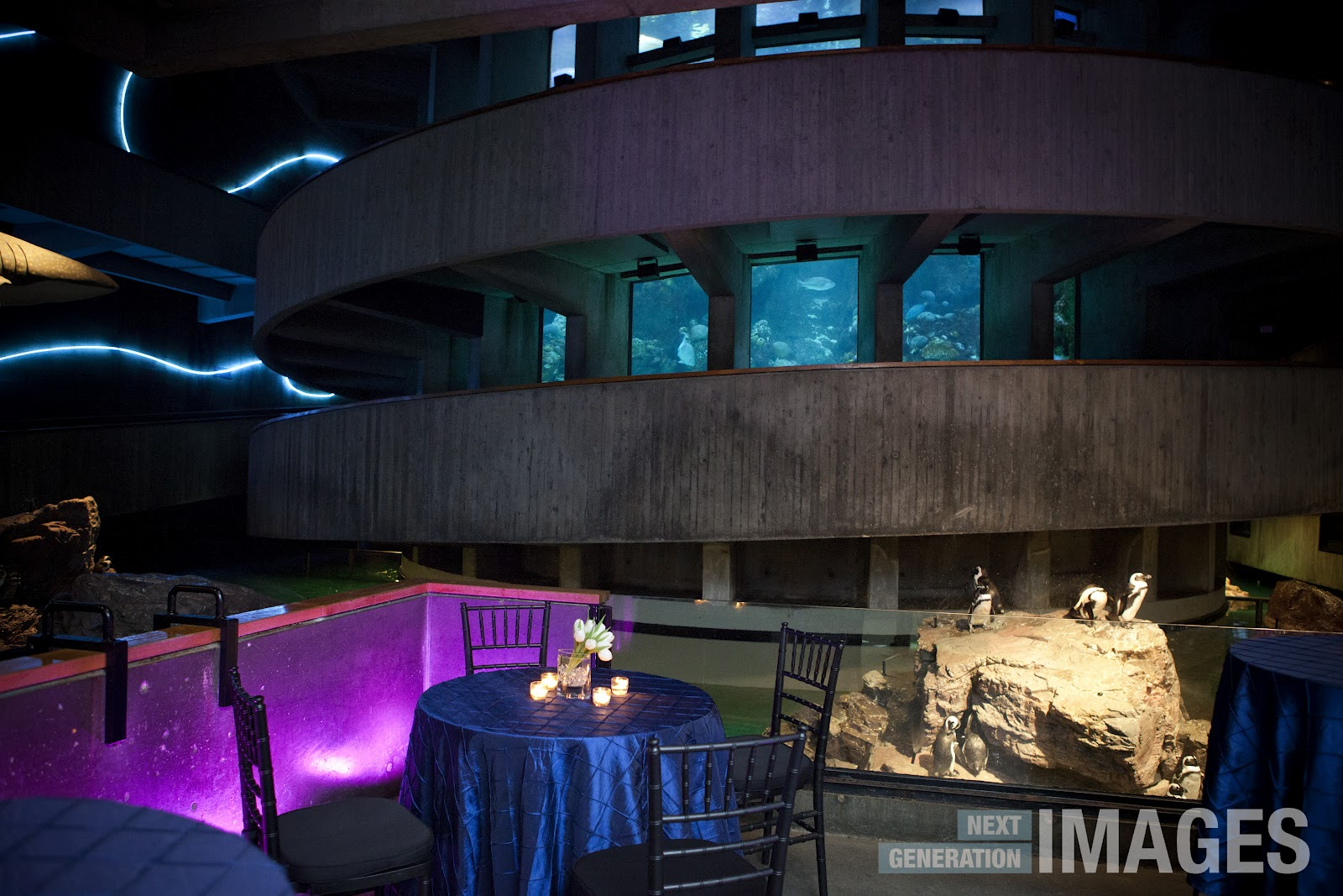 Next Generation Images Spotlight On The New England Aquarium