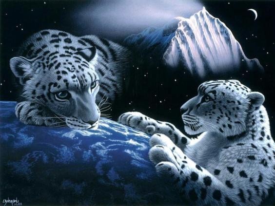 Animals Plannet White Tiger Wallpaper