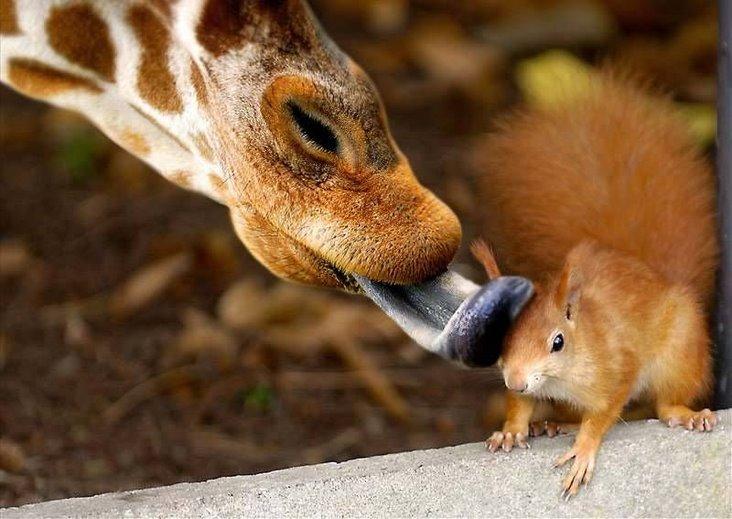 My Hd Animals Amazing Wildlife Photography