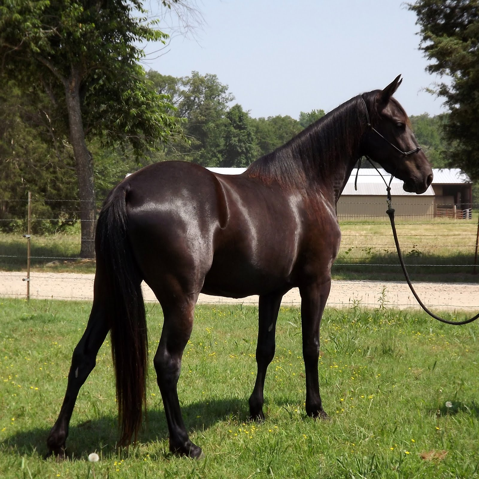 brown horse with black - photo #18