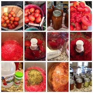 More tomato fun!