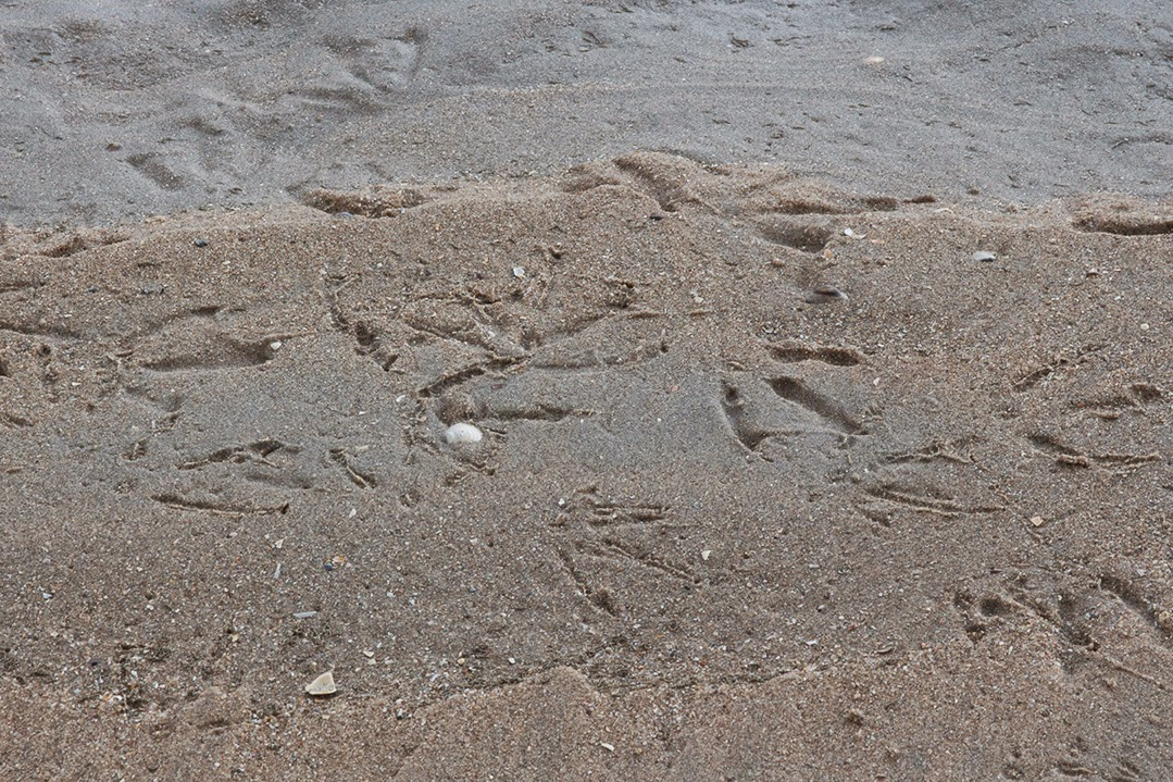 birds' feet in sand