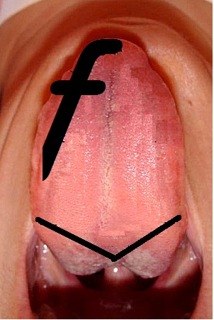 Dental Mnemonics Location Of Taste Buds