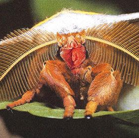 a moth's vagina