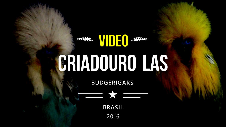 VÍDEO - CRIADOURO LAS